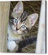 Kitten Acrylic Print by Diane Mitchell