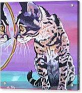 Kitten Image Acrylic Print