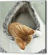 Kitten In An Igloo Acrylic Print