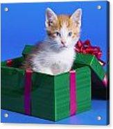 Kitten In Gift Box Acrylic Print