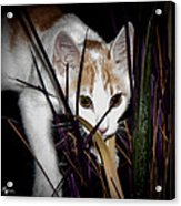 Kitten In The Plant Acrylic Print