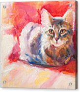 Kitten On Red Chair Acrylic Print