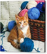 Kitten Playing With Yarn Acrylic Print