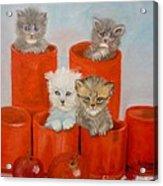 Kittens Ajar Acrylic Print