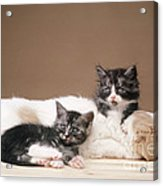 Kittens Lying With Puppy Acrylic Print