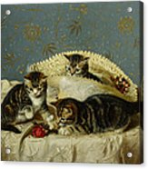 Kittens Up To Mischief Acrylic Print