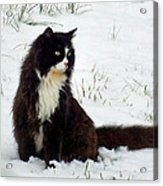 Kitty Cat In The Snow Acrylic Print