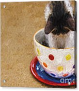 Kitty Cat Time Out Acrylic Print