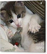 Kitty Claws Acrylic Print