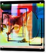 Kitty Eyes Acrylic Print