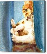 Kitty In A Corner Acrylic Print