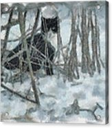 Kitty In The Cold Acrylic Print