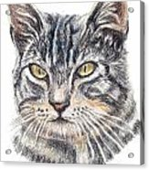 Kitty Kat Iphone Cases Smart Phones Cells And Mobile Cases Carole Spandau Cbs Art 337 Acrylic Print