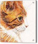 Kitty Kat Iphone Cases Smart Phones Cells And Mobile Cases Carole Spandau Cbs Art 338 Acrylic Print