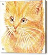 Kitty Kat Iphone Cases Smart Phones Cells And Mobile Cases Carole Spandau Cbs Art 339 Acrylic Print