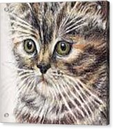Kitty Kat Iphone Cases Smart Phones Cells And Mobile Cases Carole Spandau Cbs Art 343 Acrylic Print