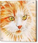 Kitty Kat Iphone Cases Smart Phones Cells And Mobile Cases Carole Spandau Cbs Art 344 Acrylic Print