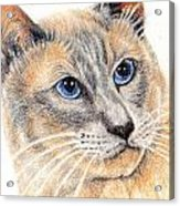 Kitty Kat Iphone Cases Smart Phones Cells And Mobile Cases Carole Spandau Cbs Art 346 Acrylic Print