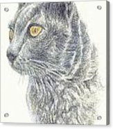Kitty Kat Iphone Cases Smart Phones Cells And Mobile Cases Carole Spandau Cbs Art 347 Acrylic Print