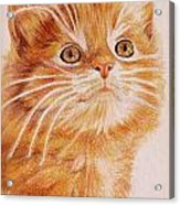 Kitty Kat Iphone Cases Smart Phones Cells And Mobile Cases Carole Spandau Cbs Art 349 Acrylic Print
