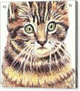 Kitty Kat Iphone Cases Smart Phones Cells And Mobile Cases Carole Spandau Cbs Art 350 Acrylic Print