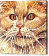 Kitty Kat Iphone Cases Smart Phones Cells And Mobile Cases Carole Spandau Cbs Art 351 Acrylic Print