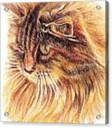 Kitty Kat Iphone Cases Smart Phones Cells And Mobile Cases Carole Spandau Cbs Art 352 Acrylic Print