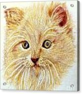 Kitty Kat Iphone Cases Smart Phones Cells And Mobile Phone Cases Carole Spandau 301 Acrylic Print