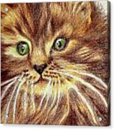 Kitty Kat Iphone Cases Smart Phones Cells And Mobile Phone Cases Carole Spandau 317 Acrylic Print
