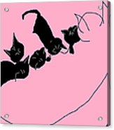 Kitty Litter  Acrylic Print by Anita Dale Livaditis