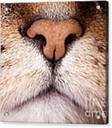 Kitty Nose  Acrylic Print