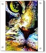 Kitty Nosed Acrylic Print