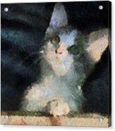 Kitty Photo Art 05 Acrylic Print