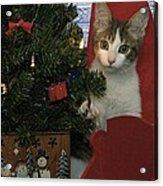 Kitty Says Happy Holidays Acrylic Print