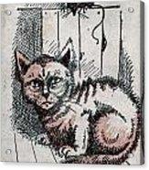 Kitty Sly Acrylic Print