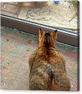 Kitty Watches The Squirrel Acrylic Print