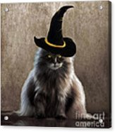 Kitty Witch Acrylic Print