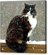 Kittycat In The Snow On The Fence Acrylic Print