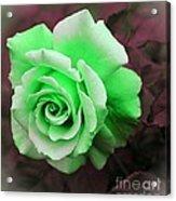 Kiwi Lime Rose Acrylic Print