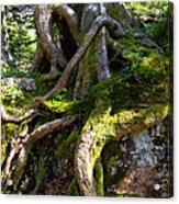 Knarly Old Tree Stump Switzerland Acrylic Print