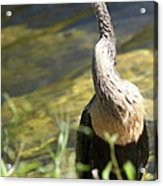 Knotted Neck Acrylic Print