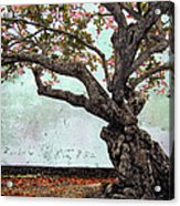 Knotted Tree Acrylic Print by Daniel Hagerman