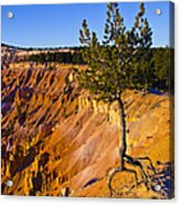 Know Your Roots - Bryce Canyon Acrylic Print