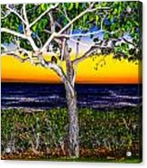 Ko Olina Tree In Sunset Acrylic Print