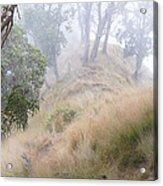 Misty Koa Ridge  Acrylic Print