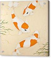 Kohaku Acrylic Print