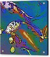 Koi 1b Acrylic Print