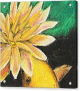 Koi And The Lotus Flower Acrylic Print