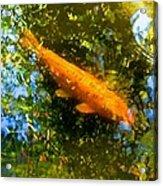 Koi Fish 1 Acrylic Print