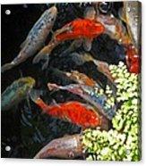 Koi Fish I Acrylic Print